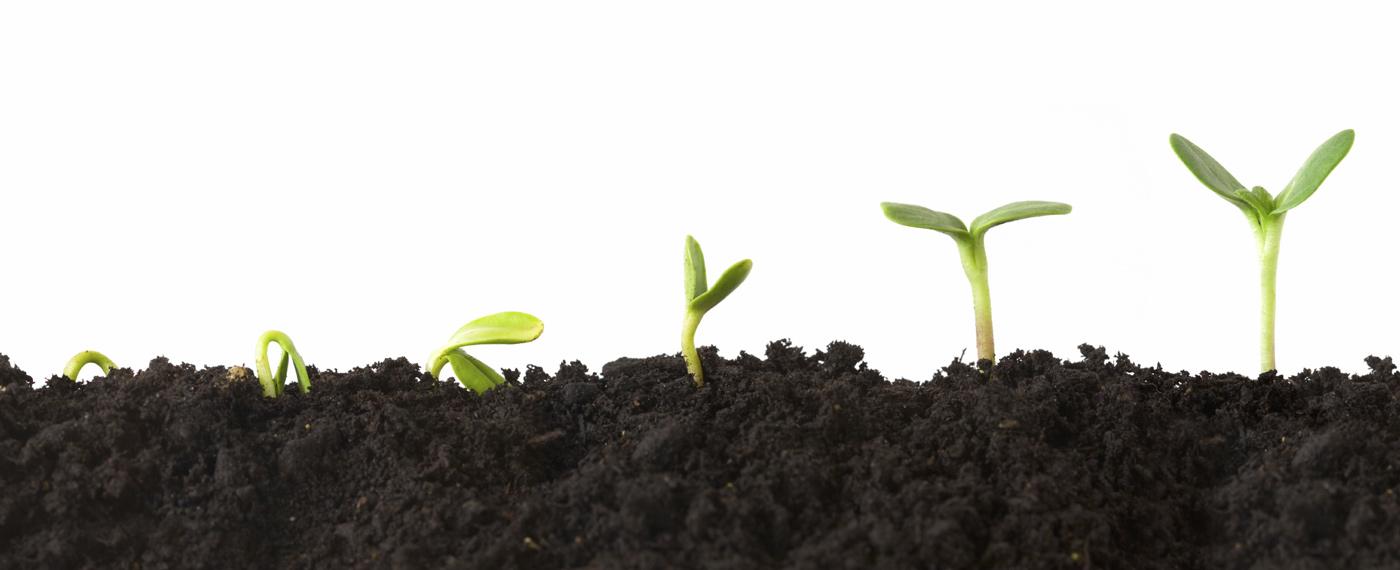 La croissance verte